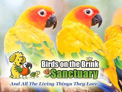 Birds on the Brink Sanctuary Showcase